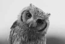 Owls / by Carrie Faircloth