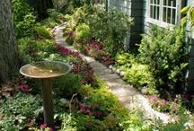 Garden & Landscape / by Alyson Curry