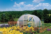 Suburban Homestead / gardening, urban homesteading / by L Katherine Baker