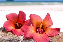 Tropical Paradise / An exotic, runaway destination where we secretly want to be trapped.  Heaven. / by Jan Reichard