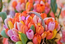 Spring has Sprung! / by Sandy Wagner
