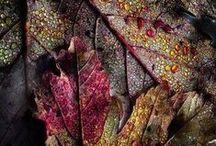 ~Fall Festival~ / by Jan Reichard