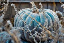 ~Blue Harvest~ / by Jan Reichard