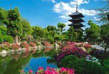 Japan / by Smcm Intl Ed