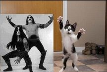 Cats / by dri