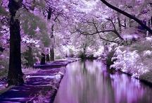 Passion for Purple / by Pamela Targan