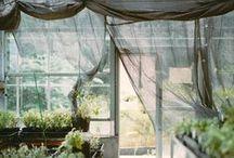 greenhouse / by Francesca Sciandra