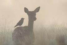 Animal Collective. / by Ainara Blancas