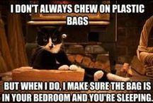 Feline Funnies / Crazy Cat Humor.. / by Renee Cordova