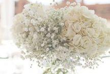 Flowers.// / by Steph Winmill