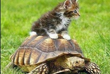 Just Cute! - Animals / ❈ Thank you for following me!! ❈  / by Márta Gosztonyi