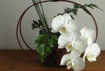 I love the flowers - ikebana / ❈ Thank you for following me!! ❈  / by Márta Gosztonyi