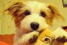 all things cute. / puppies, babies, weddings, families. / by Pamela Warntz!