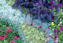 Garden / by Nicole Vingo