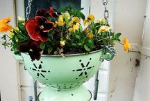 garden & outdoor love / by Joy Madison
