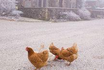 farm love / by Joy Madison