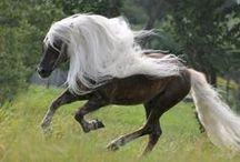 Oh My! (Horses & Dogs+++) / Beautiful and special animals / by Mary Hoggatt