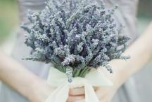 Bridal Ideas / by Gift Ideas