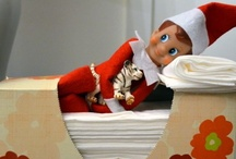 Christmas - Elf on the Shelf / by Lisa Johnson