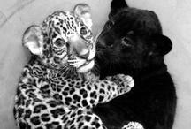 animal//love. / by Lauren Johannsen
