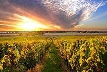 This Is Where The Magic Starts / Some beautiful photography of vineyards around the world. / by The California Wine Club