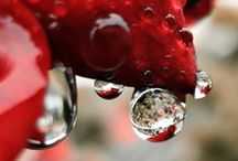 Raindrops Keep Falling On  My Head / by Progressive Research
