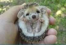 Fuzzy and Adorable Animals / by Kasey Dahm