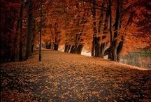 leaves / by Julie Christensen
