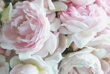 Fave flowers / by Nicola Hemmings