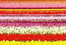 PLANTS: Flowers ~ Plants ~ Landscaping ~ Gardens ~ Garden Rooms ~ Paths / by Diane Davis