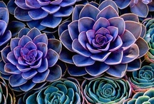 Color Inspirations / by Debra Beach
