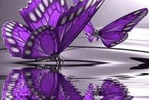 Debi Purple / by Sue McCombs