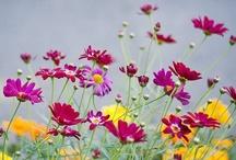 Flowers / by Grace Lovell