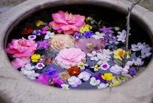 garden photos / by Victoria S Andrews