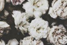 f l o r a l s. / by Emma Jesson