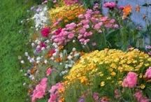 Garden / by Diane Rush