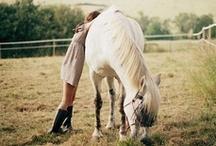 Horses :) / by Samantha Lowe