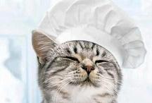 CATTUS / gato, chat, katze, kat, cat, gatto, cattus, koshka, neko, kedi / by Djalma Souza Correia