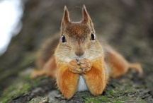 squirrels make me smile / by JoLanda Murphy