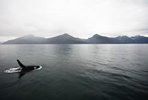 Alaska / by Kari Fischer