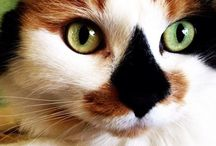 Cats and Cat things / I love my six, yes six, fur kids. I could look at pictures of cats all day. I know, because I've done it....numerous times... / by Shelley Kristine