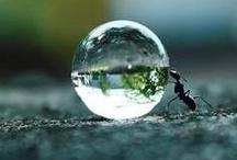 Water Drops / by usagi nomedama