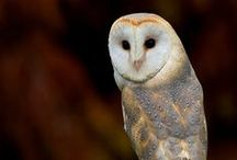 Owl's... Wisdom / by Theresa Ayers