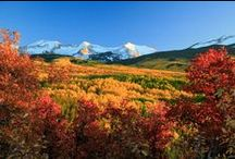 Fall in Colorado / by Theresa Ayers