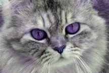 I ♥ Purple / by Kathie Fette Morales