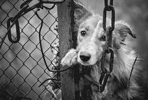 Animal Rescue / by Ania Kowalczyk-Barton