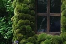Garden / by Miho Hiramatsu