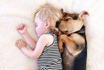 dogs / by Carol Batchelor