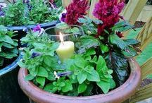 Gardening / Gardening and Landscaping Tips / by Katie Kuzior Lindhe