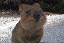 Cute Animals / by Robin Robertson